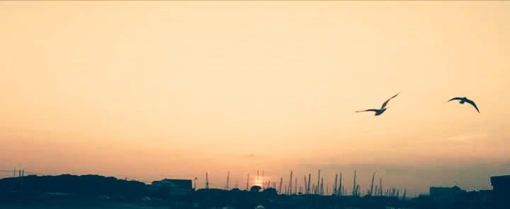 Across the Salty Horizon
